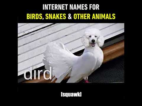 internet names for birds snakes and animals 9gag it youtube