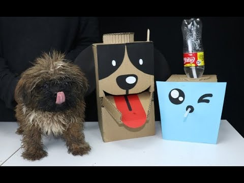Diy Puppy Dog Food Water Dispenser From Cardboard At Home Youtube