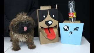 DIY Puppy Dog Food & Water Dispenser from Cardboard at Home