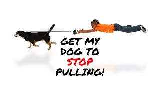 Dogs 101 How To Get A Dog To Stop Pulling On The Walk / How To Get A Dog To Heel On & Off Leash