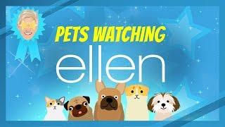 Pets Watching Ellen
