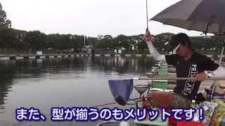 椎の木湖でのへら鮒釣り チョーチン両ダンゴで130kg! thumbnail