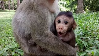 Cute Baby Monkey Cry Loudly Cos Want To See Mum ST234