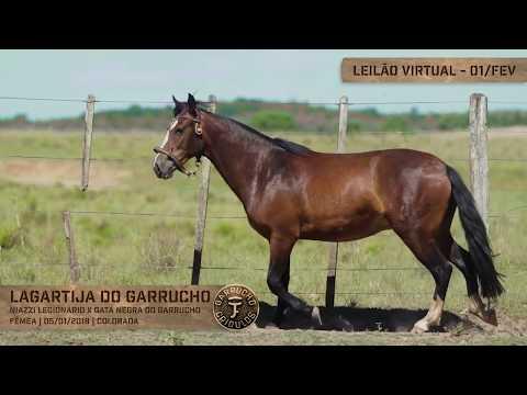 Lote 15 - Lagartixa do Garrucho