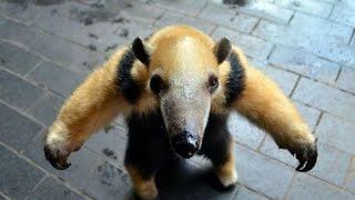 ПРИКОЛЫ  с  ЖИВОТНЫМИ  !!!  ТОП Приколов смешные животные