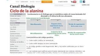 Ciclo de la alanina