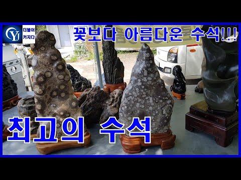 수석경매 꽃보다 아름다운 수석 총출동!!! Ep.49 수석경매장 최고의수석 명품수석  수석고르는법 수석가격 수석감정 viewing stones Korea Suiseki 水石 壽石