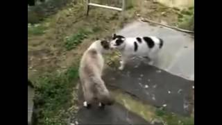Funny cats started to fight . crazy cat battle !!! .