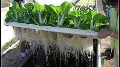 Aquaponic Gardening, Aquaponics Pdf, Fish For Aquaponics, Aquaponic Business Plan, Aquaponic Diy