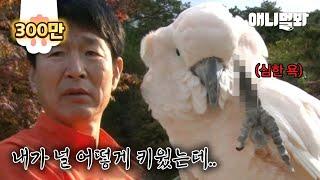자식같이 키운 앵무새에게 새춘기가 찾아왔습니다..ㅣWhen A Parrot Hits Puberty