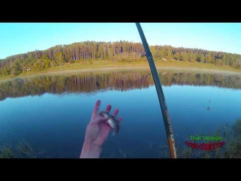 Рыбалка Daugava 23 мая. ловля Плотвы на болонскую удочку.