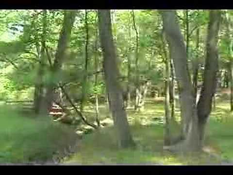 Our Little Creek in Happy Tarboro