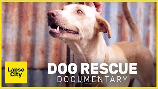 Rescuing Stray Dogs | Documentary Philippines