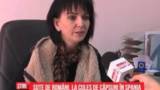Sute de români, la cules de căpşuni în Spania