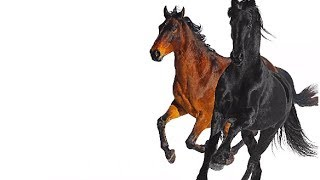 Baixar Lil Nas X - Old Town Road ft Billy Ray Cyrus Remix [LYRIC VIDEO]