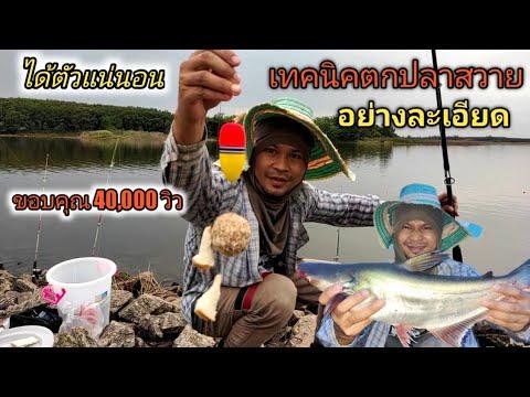 เทคนิคตกปลาสวาย หมายธรรมชาติ EP.39 บอกเทคนิคและอุปกรณ์ที่ใช้ละเอียด #ตกปลาสวาย #อ่างเก็บน้ำลาดกระทิง