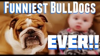 Funniest Bulldogs Ever: Bulldogs On Trampolines, Riding On Roombas Making Funny Noises!