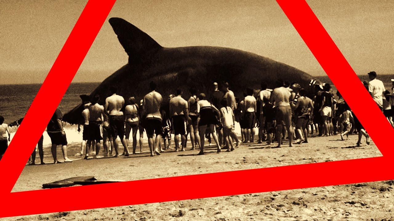 Vrai Megalodon Le Plus Grand Requin Du Monde Trouve Et Capture