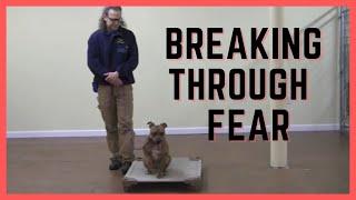 Shut down dog, breaking through the fear