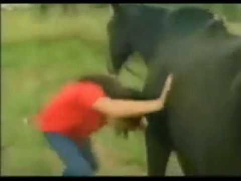 Шок!!! Лошадь насрала на женщину огромным говном. Смотреть всем!!!!