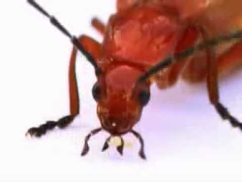 Icky Insects | kids music | kids video | kids songs | children's music | Silly Bus