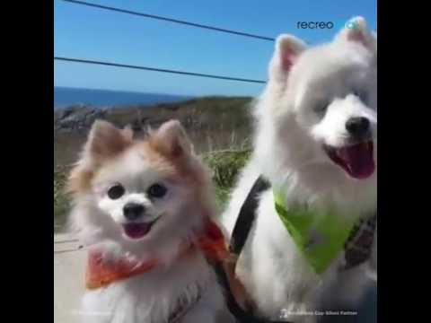 Zen y Hoshi, la historia de una verdadera amistad.