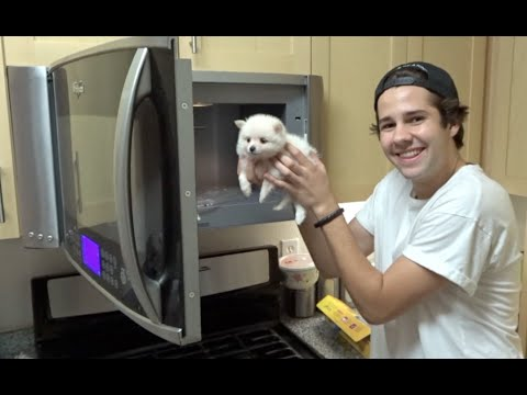 Thumbnail: PUTTING A PUPPY INTO THE MICROWAVE!! | David Dobrik