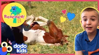 Brave Rescuers Save Trapped Wild Horse | Animal Videos For Kids | Dodo Kids
