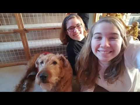 Murphy- The best dog
