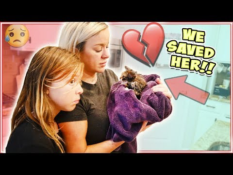 WE RESCUED A BABY KITTEN!! CAN WE KEEP HER?!