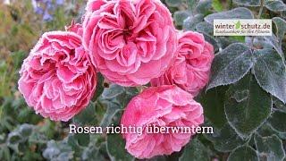 Winterschutz für Rosen: Rosen überwintern