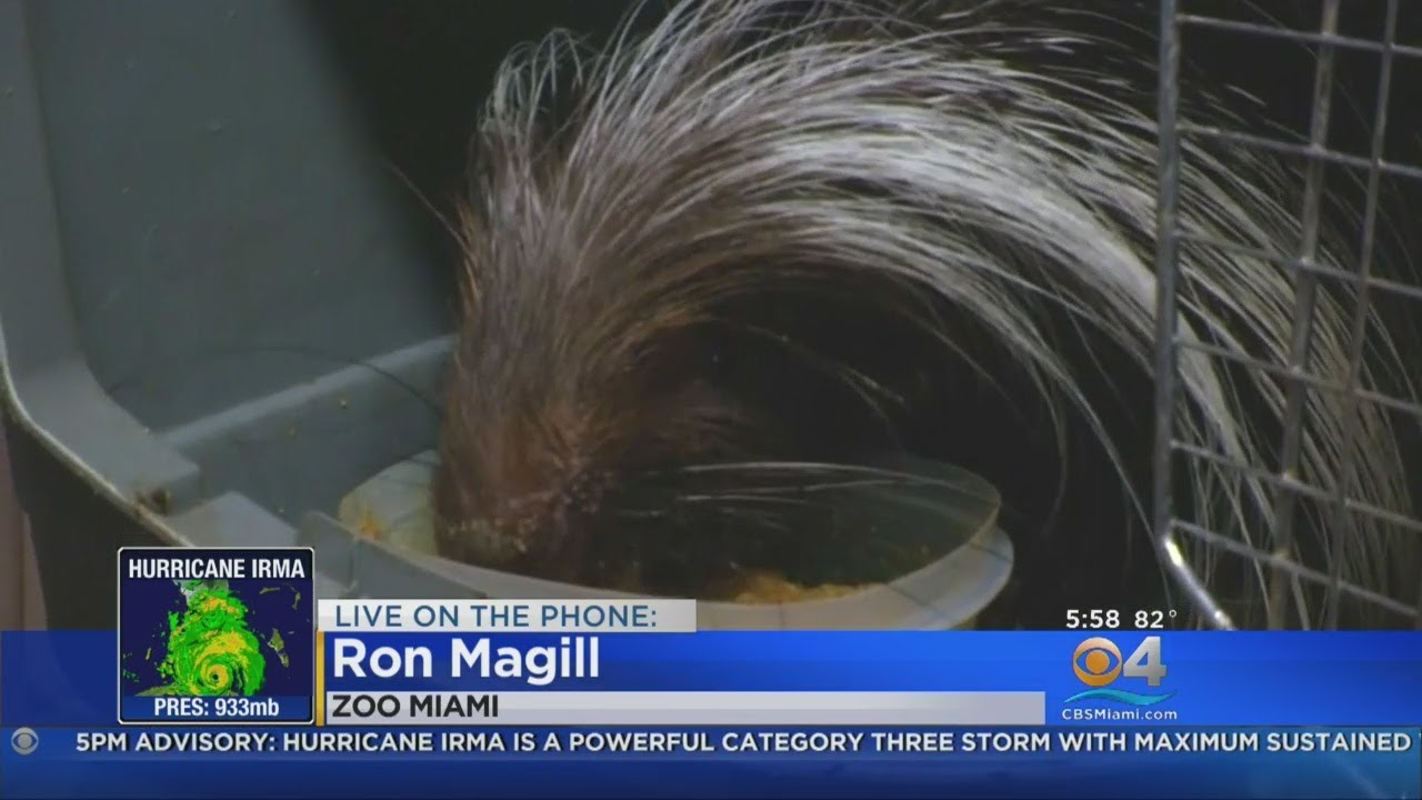Ron Magill Gives Update On Zoo Miami Doovi