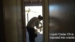 Lady Bug Pest Control in Mesa AZ - German Roach Treatment