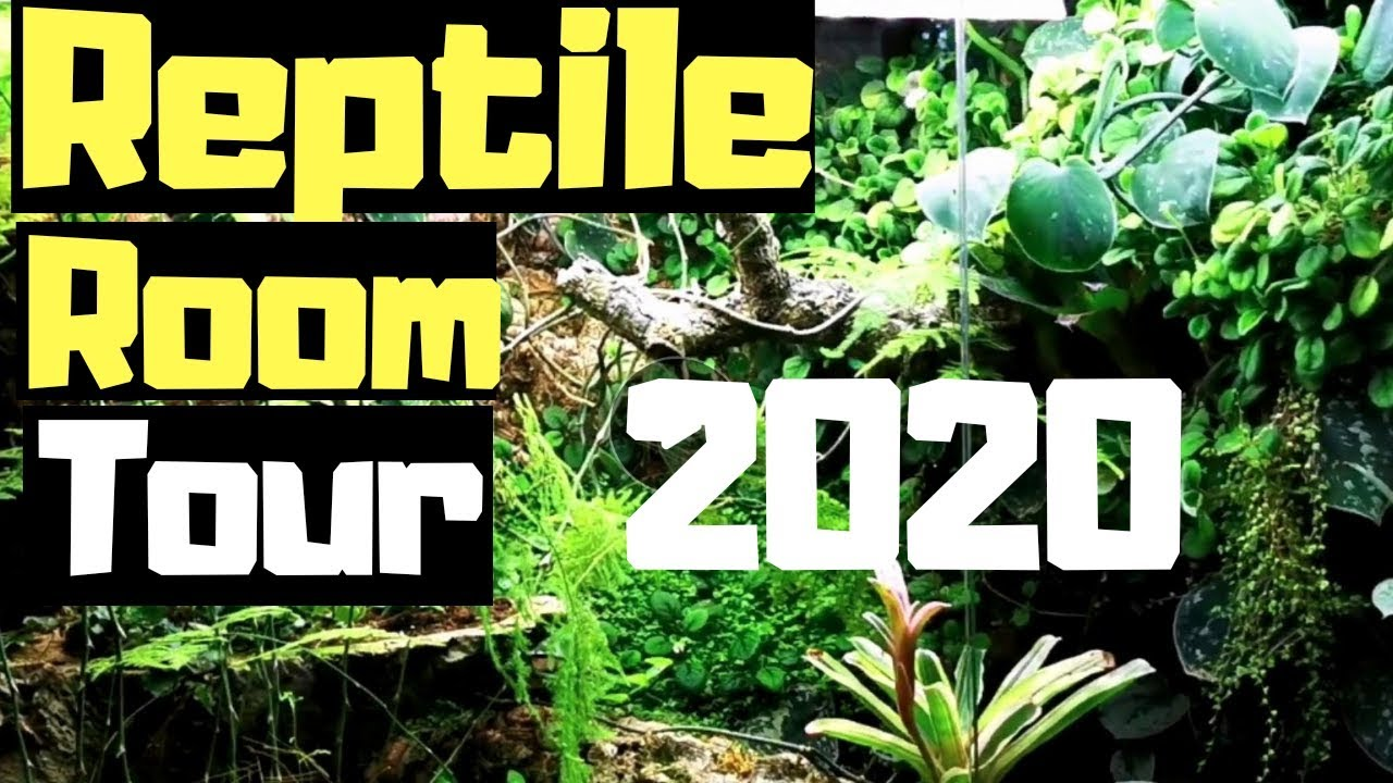 Reptile Room Tour 2020 || Inside Reptile Systems