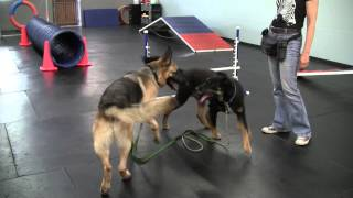 Westside German Shepherd Rescue - Enzo