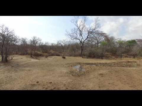 Amazing Selous by Drone   African Wildlife Aerial Video in 4K