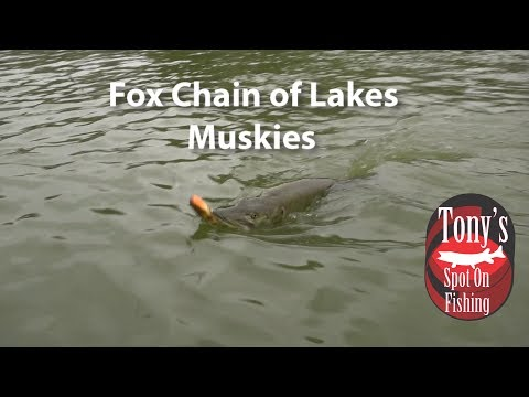 Fox Chain Of Lakes Muskies