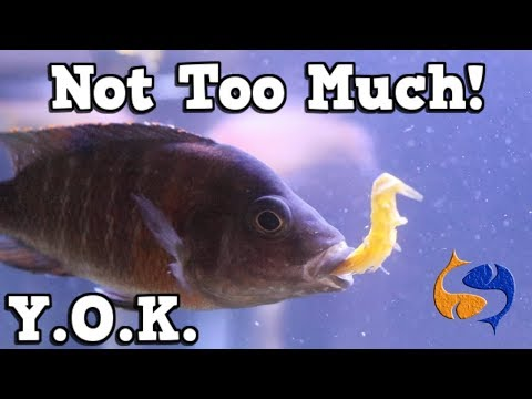 Don't Over Feed Your Fish! But Why? You Oughta Know Over Feeding Kills Fish!