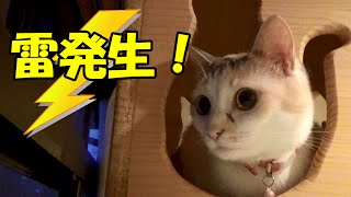 Cat afraid of thunder and not one. And Cats after the Tyhoon.