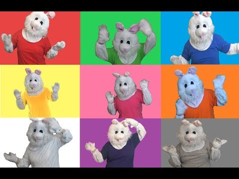 Finger Family Song | Learn about Colors | Colours with Bunny | fun learning videos for kids |