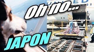 Perro Llega a JAPON por ERROR (serio) [By TodoJAPANESE]