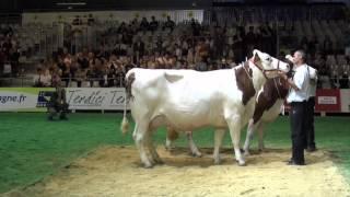 Concours montbéliarde 2012 : Densité, une grande championne qui a du caractère