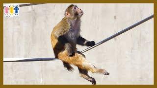 アカゲザル🐵井の頭自然文化園の動物🎪グルーミング