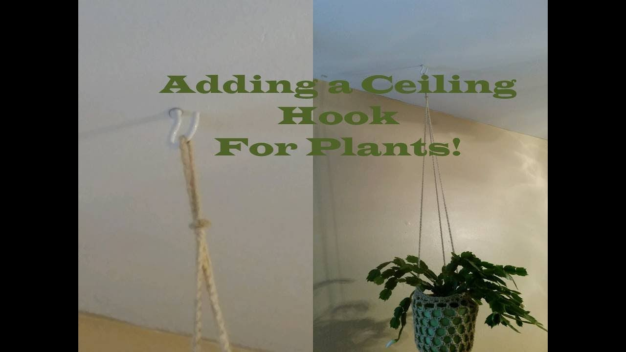 Adding A Ceiling Hook For Plants