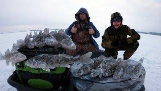 Вот ПОВЕЗЛО! ТАКУЮ РЫБУ МЫ ЕЩЕ НЕ ЛОВИЛИ!!! Зимняя рыбалка 2018-2019. Ловля КРУПНОГО Берша,Волга.