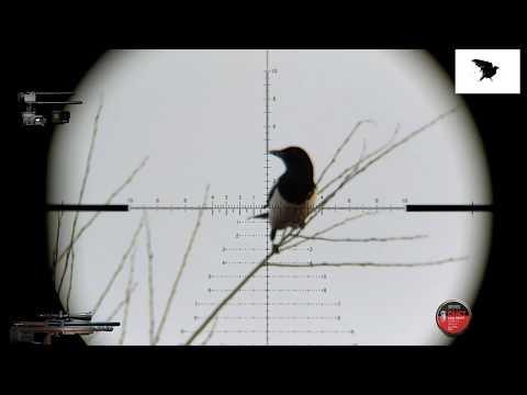 Crow Hunting Кроухантинг Карррааантин!!!