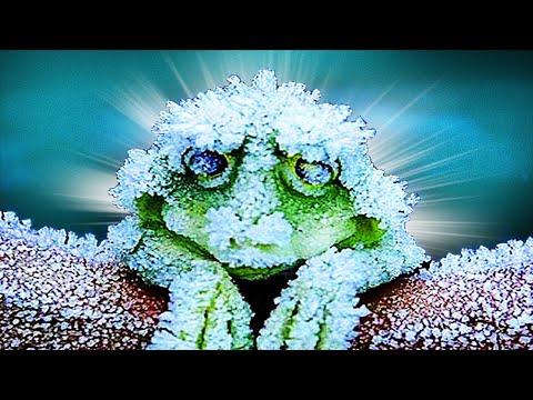 Вопрос: Где же действительно зимуют лягушки?