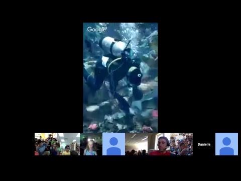 Ripley's Aquarium of Canada | North West Pacific Kelp Tank