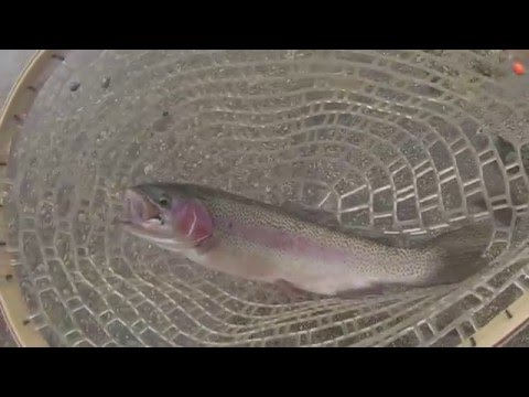 Bobber fishing for winter trout youtube for Bobber fishing for trout
