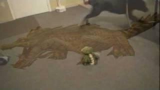 Rottweiler Vs Attack Crocodile
